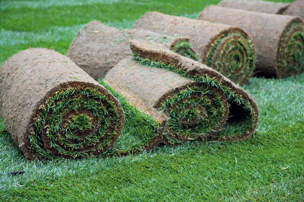 2. Trávnik za jeden deň Ak nechcete dlho čakať ani na pekne zelený trávnik, zaobstarajte si od osvedčeného pestovateľa hotové trávne koberce. Ich položenie pri troche šikovnosti zvládnete veľmi rýchlo, vyjde vás to však podstatne drahšie. Nezabudnite, že pôdu pod kobercom musíte dôkladne pripraviť. Ukladajte ho vdňoch, keď je zamračené, povalcujte, zalejte auž vdeň položenia po ňom môžete chodiť.