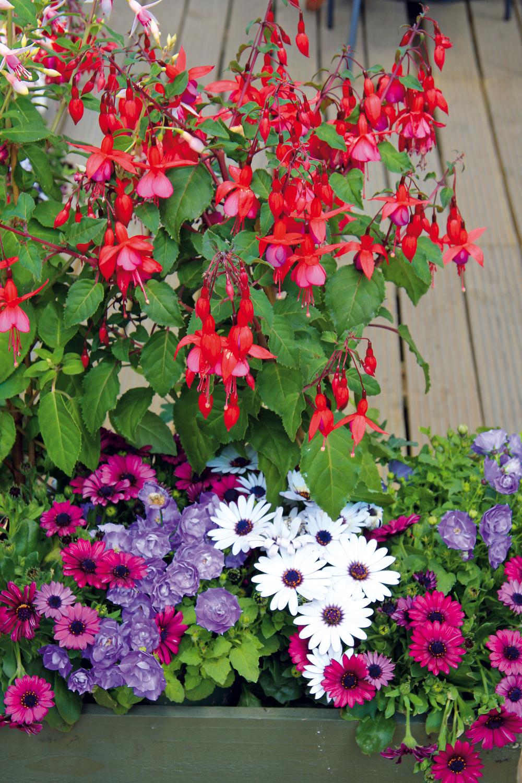 3. Rozkvitnutá terasa Vprípade, že sa vám nepodarí dostať záhradu do akej-takej formy ani na jar, môžete to ešte dobehnúť na terase. Nakúpte si rôzne druhy vegetačných nádob avysaďte ich kvitnúcimi letničkami či atraktívnymi subtropickými drevinami. Pri pravidelnej aintenzívnejšej závlahe apravidelnom prísune živín sa zvyčajne nádherne rozrastú abohato pokvitnú až do prvých mrazov. Ato krátko po výsadbe. Druhy vyberajte sohľadom na podmienky daného miesta.