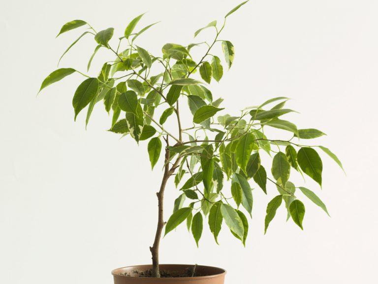Pozor na škodcov izbových rastlín