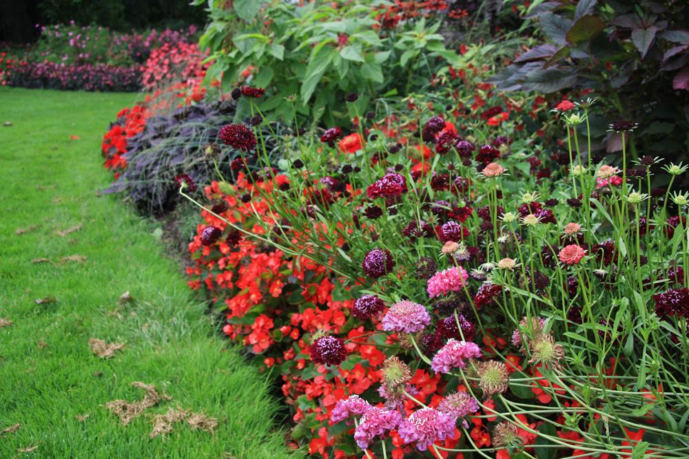 Kvetinové okraje  Kzáhonu patrí decentné zakončenie, najlepšie zakvitnutými okrajmi. Využiť sa dajú bohato kvitnúcefloxy (Phlox subulata), pakosty (Geranium macrororrhizum), devätorníky (Helianthemum), zvončeky (Campanula carpatica), klinčeky (Dianthus deltoides), trávničky (Armeria maritima), alpínske astry (Aster alpinus) či kocúrnik (Nepeta faassenii), zletničiek netýkavky, begónie, ageráty, lobelky, kapucínky, železníky a lobulárie.