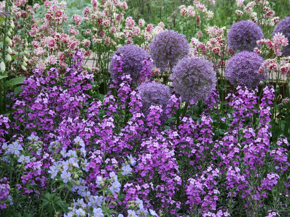 Kvetinový záhon atraktívny po celý rok