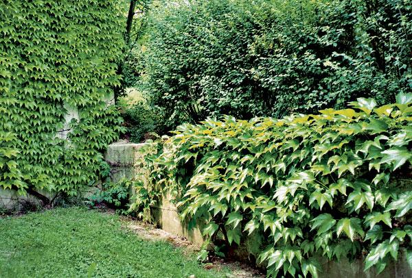 Atmosféra záhrady