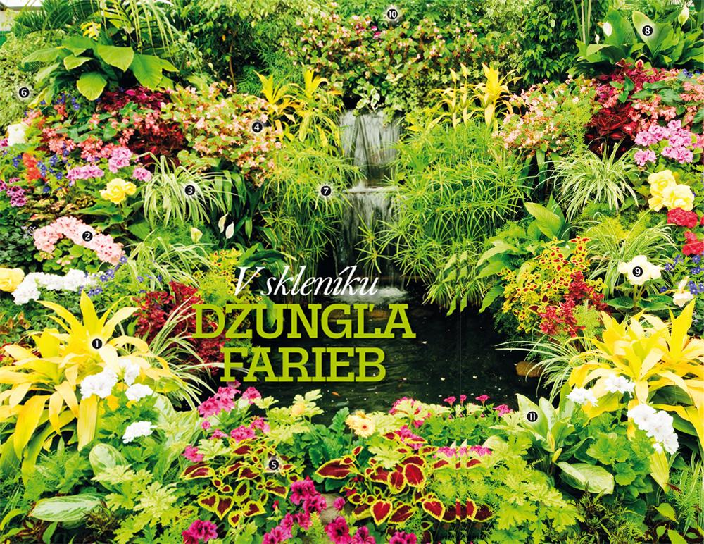Rozžiarte zimnú záhradu pestrými farbami izbových rastlín