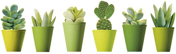 Dekoračné nálepky Slätthult – mini kaktus, motív z ateliéru Nouvelles, 26 × 34 cm, 4,99 €, IKEA