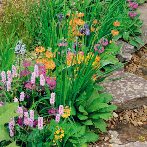 Odtiene ružovej, iskrivá oranžová, nežná belasá či výrazná fialová. Záhrada na jar hýri farbami.