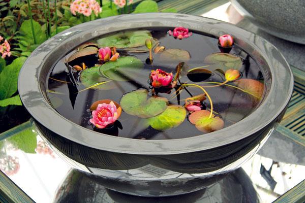 Jazierko v nádobe  Aktuálnym hitom sú jazierka v nádobe, ktoré si môžete založiť aj svojpomocne. Poslúži vám na to špeciálna nádoba so stenami, ktoré neprepúšťajú vodu. V minijazierku môžete pestovať miniatúrne lekná (ak ho umiestnite na slnečné miesto), ako aj rôzne vodné a močiarne rastliny. Aj tu však platí, že menej je viac, a teda nie je dobré pokryť nimi celú hladinu. Veľmi pekné sú aj rôzne plávajúce rastliny. Vysádzajú sa do špeciálnych košov a do substrátu určeného na pestovanie vodných rastlín, ktorý je nevyhnutný a je základom neskoršieho úspechu.