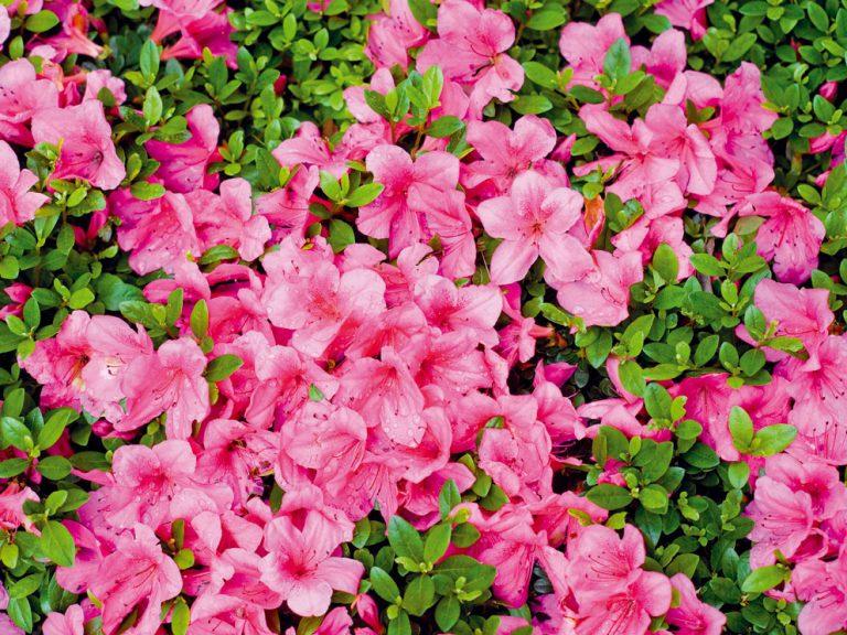 Májové tipy do vašej záhrady, na dvor či balkón