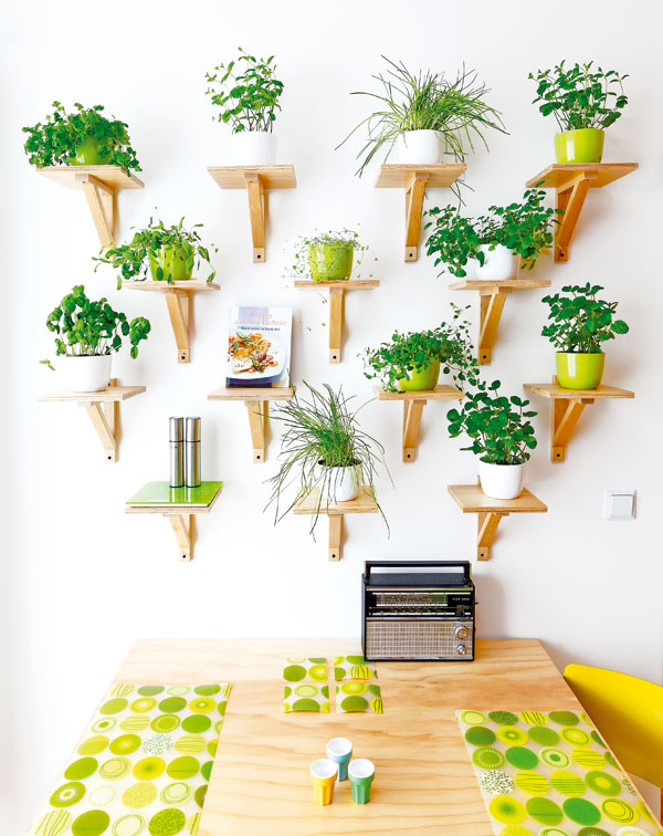 """Biela stena oproti výraznej kuchynskej linke sa zmenila na zelenú bylinkovú """"záhradku"""".  Tento nápad vzišiel zo ženských hláv. Malé poličky sú tiež vyrobené zborovicovej preglejky."""