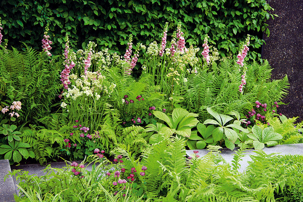 Tieň apolotieň neznamená slnečno   Tieň apolotieň poskytujú ideálne podmienky na pestovanie mnohých krásnych rastlín, ktoré však slnko nemajú príliš vobľube, napríklad astilby, orlíčky, srdcovky, veternice či rodgerzie. Do tejto kategórie patrí aj pestrá paleta trvaliek sokrasnými listami vrôznych netradičných farebných variáciách, vďaka ktorým nevľúdna záhrada okamžite ožije anaberie na dynamike, prípadne aj tieňomilné okrasné trávy – ostrice. Veľa majiteľov záhrad však robí presný opak. Na tienisté miesta vysádza slnkomilné druhy, ktorým sa tu dariť nikdy nebude. Ani ruže aväčšina pestrofarebných letničiek (svýnimkou netýkaviek, fuksií, begónií) tu jednoducho nikdy neporastú, budú živoriť askoro zahynú.