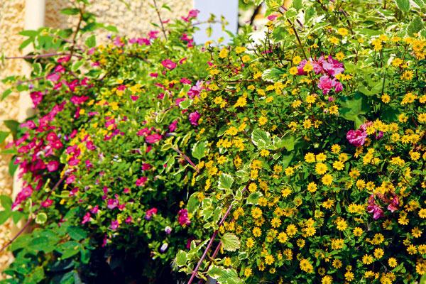 Záhradný poradca na mesiac jún
