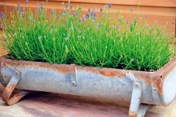 Odpovedáme na vaše otázky k pestovaniu okrasných rastlín