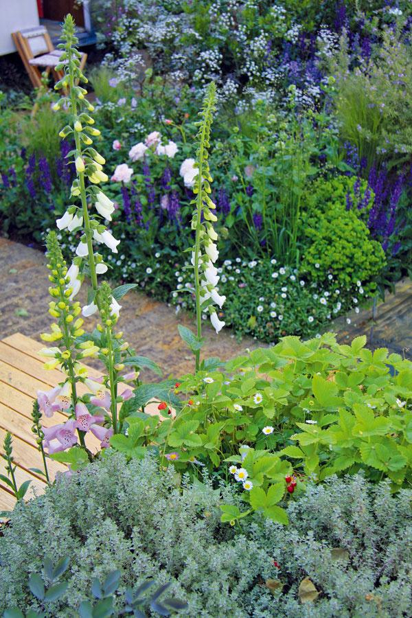Vneveľkej záhrade dominujú popri starom karavane z vrakoviska predovšetkým bielo kvitnúce trvalky, ktoré výborne presvetlia aj tmavšie miesta.