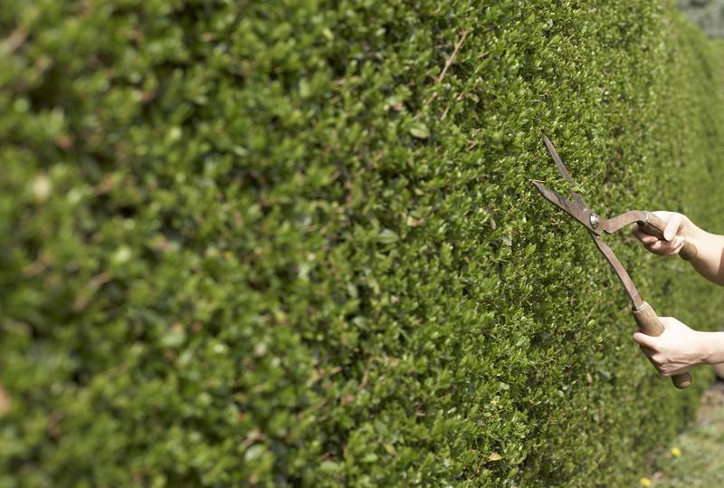 Radíme, ako sa starať o živý plot v záhrade