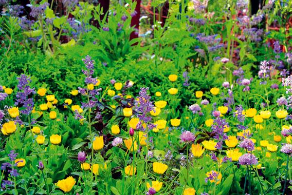 Ekologická záhrada vyčnievajúca zradu
