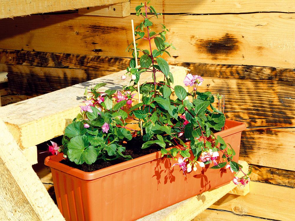 Spestrite si balkón kvitnúcimi letničkami so samozavlažovaním