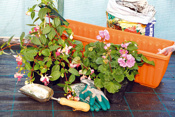 PRÍPRAVA MATERIÁLU. Na výsadbu kvetinovej debničky budete potrebovať praktickú samozavlažovaciu nádobu ideálne vo farbe blízkej farbe fasády, pevne vyvinuté arozkvitnuté rastliny, lopatku, substrát azásobné hnojivo. Rastliny vysádzajte na polotienistom mieste, ideálne dopoludnia alebo podvečer.