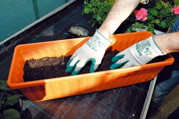 NAPLNENIE SUBSTRÁTOM. Do pripravenej nádoby nasypte prvú vrstvu substrátu určeného na pestovanie balkónových letničiek. Do substrátu sa vyplatí primiešať hnojivo spostupným uvoľňovaním živín.