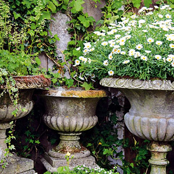 V historickom štýle. Mnohé staršie terasy a balkóny majú predpoklad na vytvorenie výsadby v historickom štýle.   Krásne sú rôzne kameninové nádoby, ktoré dokážu časom zájsť efektnou patinou, pekné sú aj nádoby z kovu. Pri   výbere rastlín je dobré zohľadniť podmienky daného miesta. Veľakrát je na takýchto terasách tienisto, a preto sa   sem hodia hortenzie, begónie, fuksie, brečtany či krušpány. Na slnečnejšie miesta sú vhodné muškáty alebo   železníky. Rovnako dobre však v starodávne pôsobiacich nádobách vyzerajú aj nižšie okrasné trávy alebo plazivé   rastliny.