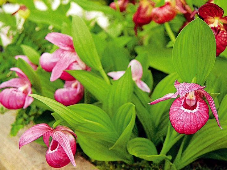 Júlové rady pre vaše rastlinky na záhrade, balkóne a v interiéri