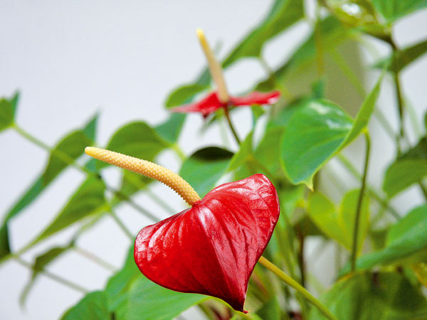 Pýtate sa na pestovanie okrasných rastlín a my odpovedáme