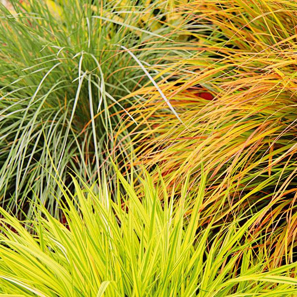 Vlasaté krásavice. Koncom mesiaca môžete začať do nádob vysádzať okrasné trávy. Vhodné sú najmä nižšie astredne vysoké druhy – ostrice, kostravy, perovce, kavyľ, ovsíkovec či chlpaňa, ktoré budú pekne rásť vterakotových, ale aj kovových nádobách sdrenážou. Keďže ide onenáročné viacročné rastliny, môžete ich nechať vonku aj počas zimy. Dajú sa pestovať samostatne, ale aj vkombinácii sinými rastlinami. Potrebujú dostatok slnka apestovať ich možno vbežnom substráte . Nevyžadujú intenzívne zavlažovanie, potrebný je ale rez vpredjarí aobčasný prísun živín.