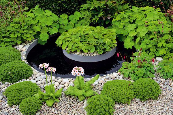 Minijazierko uprostred štrkovej plochy  Vostatnom období sa teší veľkej obľube budovanie štrkových záhonov aplôch, vktorých množstvo rastlín vynikne oveľa viac ako vklasickom záhone. Prítomnosť štrku im dokonca pomáha, aby zostali kompaktné avitálne. Trendom je dopĺňanie štrkových plôch o vodné plochy sveľkosťou mini. Ak máte modernú záhradu, veľmi efektne vyzerajú plochy vgeometrických tvaroch. Vodnú plochu môžete rozbiť aj malým ostrovčekom – zelenú farbu rastlín zaujímavo doplní sivá ačierna (dno vodnej plochy). Podobné riešenie je vhodné do polotieňa. Vysadiť tu môžete štrk obľubujúce lomikamene, alchemilky, pakosty, srdcovky, pivónie aj prvosienky, ktorým sa vblízkosti vody darí najlepšie.