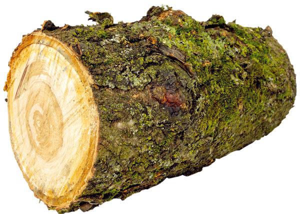 Ak máte vzásobe odpílené kmene starých stromov, môžete ich použiť na lemovanie mierne vyvýšeného záhona, napríklad stekvicami.