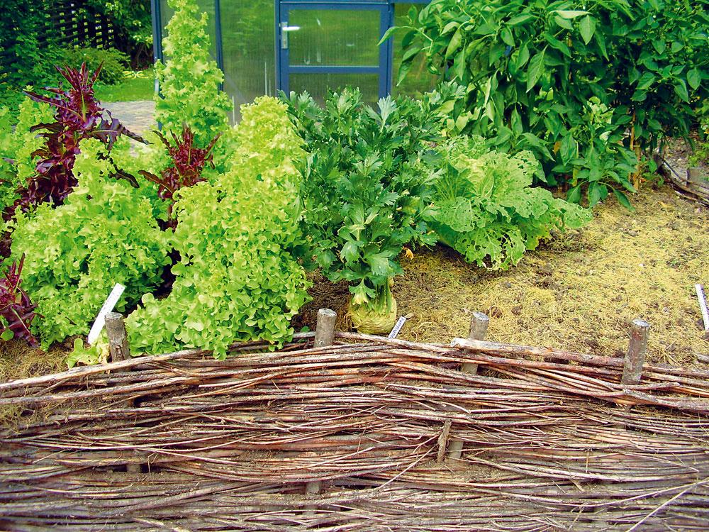 Plávajúce záhony  Hromadia sa vám ostrihané konáriky? Kým sú čerstvé aohybné, využite ich. Kolíky vysoké 50 až 70 cm zatlčte do pôdorysu ľubovoľného tvaru (napríklad vtvare člna srozmermi 2 × 1 m) apomedzi ne prepletajte konáre. Na záhon postupne vrstvite pôdu zo záhrady, pokosenú trávu alebo kompost. Ak ho stihnete naplniť vtomto roku, môžete si naň vysadiť pestrofarebné letničky (aksamietnice, gazánie, astry, petúnie) alebo zeleninové priesady (zeler, mangold, šalát).