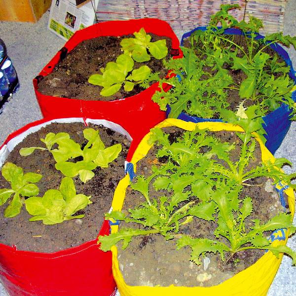 Keď taške doslúžia uši  Netreba ju hneď vyhodiť. Vysteľte jej dno novinami, naplňte ju substrátom avysaďte si priesady šalátu, kalerábu, cibuľky sadzačky alebo zo dve-tri kríčkové rajčiny. Kúsok svetlého ateplého miesta sa vzáhrade vždy nájde. Toto riešenie je vhodné aj pestovanie zeleniny na balkóne. Po zbere úrody môžete substrát dať do kompostu atašku naozaj vyhodiť.