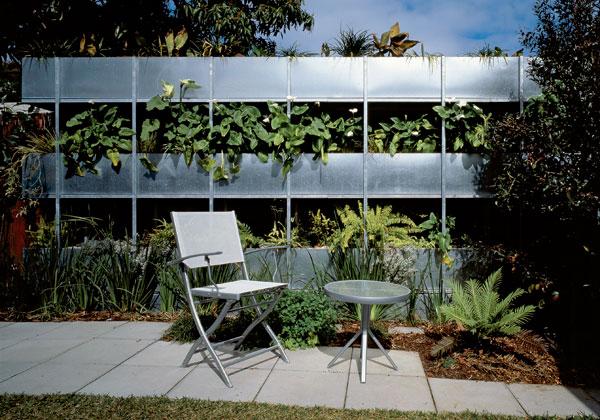 Austrálsky zelený nápad