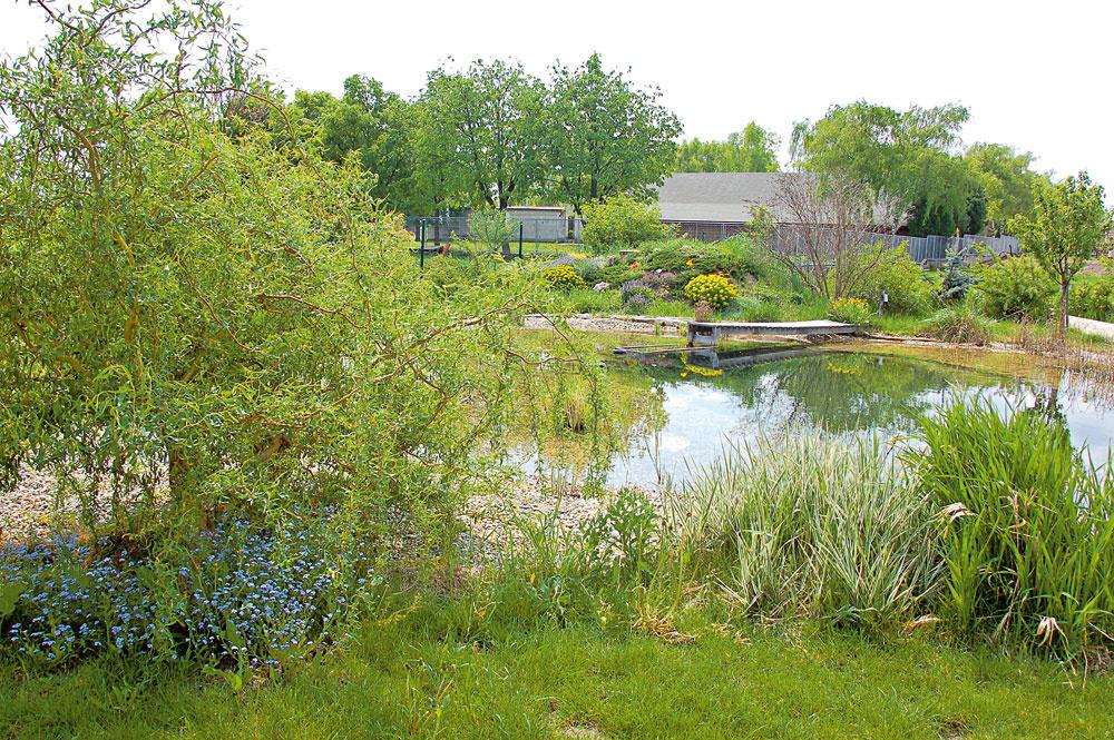 Jazierko na prírodný spôsob prinesie do záhrady život. Nielenže sa dá prispôsobiť na kúpanie, ale priláka aj zvieratá avtáctvo. Ožije aj fauna pri brehu, kde môžu rásť vodomilné rastliny. Môže sa doň odvádzať dažďová voda zo striech, ak ju neviete využiť inak. Takéto jazierko je bezpečnejšie aj pre deti, lebo brehy má plytké, určené pre rastliny čistiacej aregeneračnej zóny.
