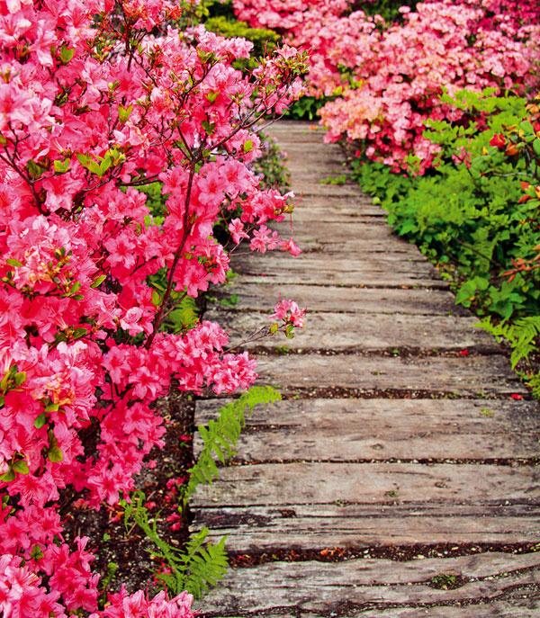 Chodník zčiastočne zapustených starých drevených hranolov sa priam pýta do prírodne ladenej záhrady. Ak nie je drevo impregnované, časom a zásluhou poveternostných vplyvov získava patinu. Nevýhodou tohto riešenia je, že počas nepriaznivého počasia je chodenie po takomto chodníku zložitejšie.