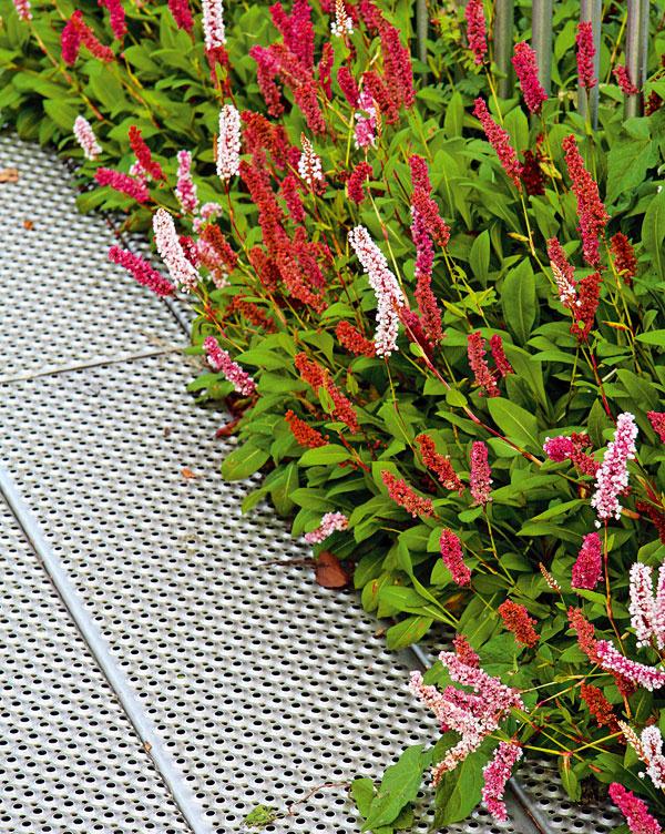 Záhradný dizajn neobišiel ani kovové dielce. Netreba sa báť starého hrdzavého železa. Sniektorými rastlinami totiž môžu zhrdzavené mriežky vytvoriť dokonalú dvojicu.