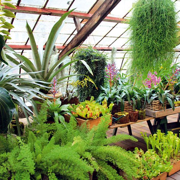 Veľké sťahovanie zelene. V októbri je najvyšší čas premiestniť izbové rastliny do interiéru. Predtým ich dôkladne prezrite, odstráňte im suché a poškodené výhonky a listy, prekyprite pôdu v nádobe a  nádoby očistite vlhkou handričkou. Rastliny je najlepšie sťahovať na poludnie, v dňoch, keď je teplo a slnečno. Pred prenesením ich zalejte. Rastliny umiestňujte podľa ich nárokov. Nie všetky môžu putovať do vyhriatej obývacej izby – mnohé rastliny potrebujú síce svetlo, ale skôr chlad. Schovať treba aj subtropické dreviny, ktoré v lete skrášľovali balkón.