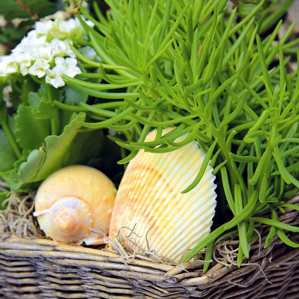 Dovolenkové dekorácie. Z dovolenky, či už v horách, alebo pri mori, si mnoho ľudí prináša rôzne drobnosti – kamienky, kôru, konáriky a často aj mušle. Mnohé z nich môžete využiť pri kompozíciách z izbových rastlín. Mušle rôznych tvarov, a ak je to možné v jednotnej farebnosti, sa môžu poukladať na povrch substrátu napríklad sukulentných rastlín, kaktusov či druhov pôvodom zo Stredomoria. Nádherne pôsobia najmä tie preparované a vybielené. Tieto dekoračné prvky navyše obmedzujú vyparovanie vody, takže nie je potrebné až tak často siahať po krhličke s vodou.