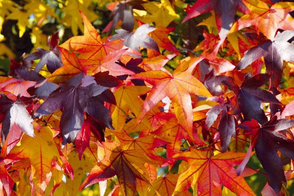 Ako môžete svojej záhrade pomôcť v októbri