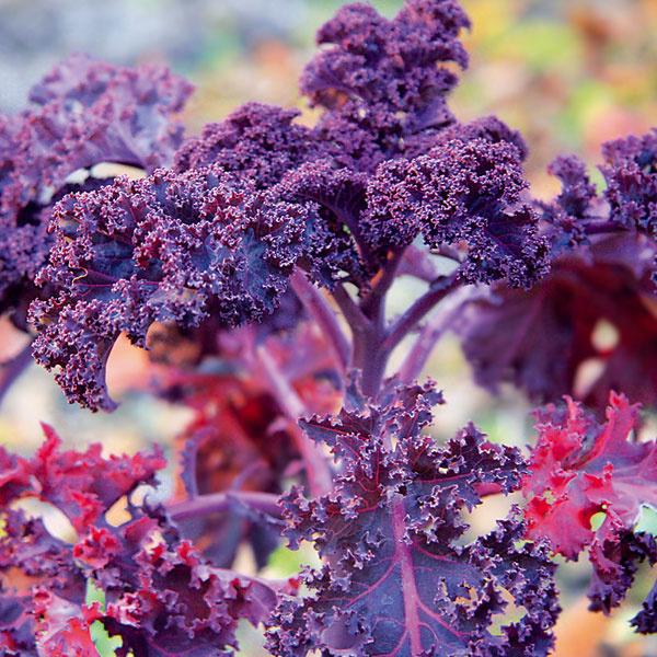 Keď jeseň prospieva. Prehnaná aktivita sa neoplatí ani v záhrade. Ten, kto v záhrade bezhlavo strihá, sa môže pripraviť o veľa pekného. Niektoré rastliny sa totiž vplyvom jesenného chladu výraznejšie sfarbujú, iné bohatšie kvitnú alebo sa pýšia zaujímavými súplodiami či habitusom. Ani všetku zeleninu netreba zlikvidovať. Kučeravý kel, pór či kučeravý petržlen sú pastvou pre oči. Nechať môžete aj odkvitnuté rudbekie, myšie chvosty, rozchodníky, plesňulky, astilby či slnečnice. Takisto nie je dobré rezať okrasné trávy, ktorých žltnúce steblá sú peknou dekoráciou.