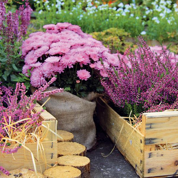 Prázdne miesta. Ako a čím vyplniť prázdne miesta? To je dilema mnohých majiteľov záhrad. Keď rastlina odkvitne, stáva sa nezaujímavou a ľudia majú tendenciu nahradiť ju inou. V záhrade by ale malo niečo kvitnúť a niečo odkvitať. Hneď ako odkvitnú letničky, je možné ich nahradiť dvojročnými rastlinami, prípadne vyššími chryzantémami. Ak je záhon menší, možno doň zakomponovať typicky jesenné trvalky. Napríklad heuchera vynikne prekrásne sfarbenými listami, ktorých atraktivitu chlad ešte zvýrazní. Nič nepokazíte ani tým, ak si v prednej časti záhrady založíte vresovisko.