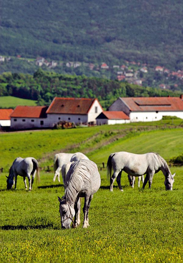 Toto je ten náš slovenský vidiek s nádhernou atmosférou, nechýba romantika a krásna príroda. Takto by sme sa mali prezentovať svetu.