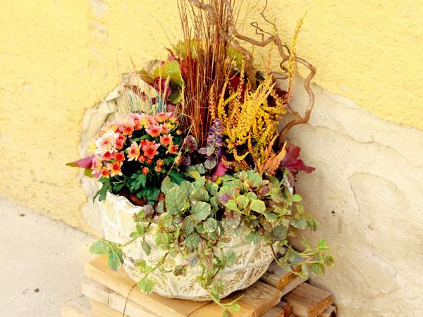 Vytvorte si originálnu jesennú výsadbu