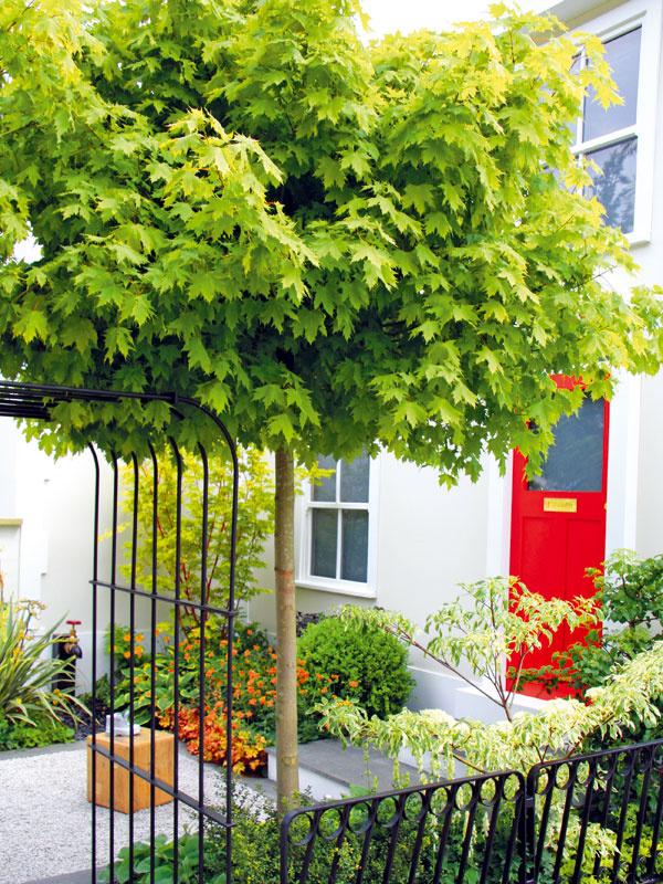 1. Zadovážte si ministromy   Ak vaša záhrada neposkytuje dostatok priestoru na pestovanie stromov, zamerajte sa na druhy s kompaktným, menším vzrastom a pomalším rastom. Jeseň je na ich výsadbu najvhodnejšia. Pri ich výbere zohľadnite nielen podmienky, ktoré vyžadujú, ale aj šírku koruny. Môžete ich umiestniť ako solitéry do trávnika, do záhonu či predzáhradky. Aby koruna zostala kompaktná, je potrebný občasný rez. Väčšina minidrevín je dlhoveká, potrebuje slnko, humóznu a priepustnú pôdu. Ministromy sa vysádzajú s koreňovým balom a ich kmeň má výšku dospelého človeka. Vhodným zástupcom je javor (Acer ginnata 'Globosum') či agát (Robinia pseudoacacia 'Umbrauculifera').