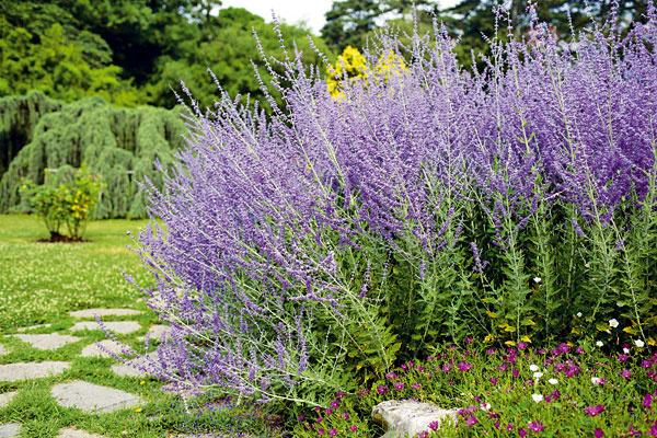 Ako zazimovať bonsaje a ďalšie vaše otázky z okrasnej záhrady