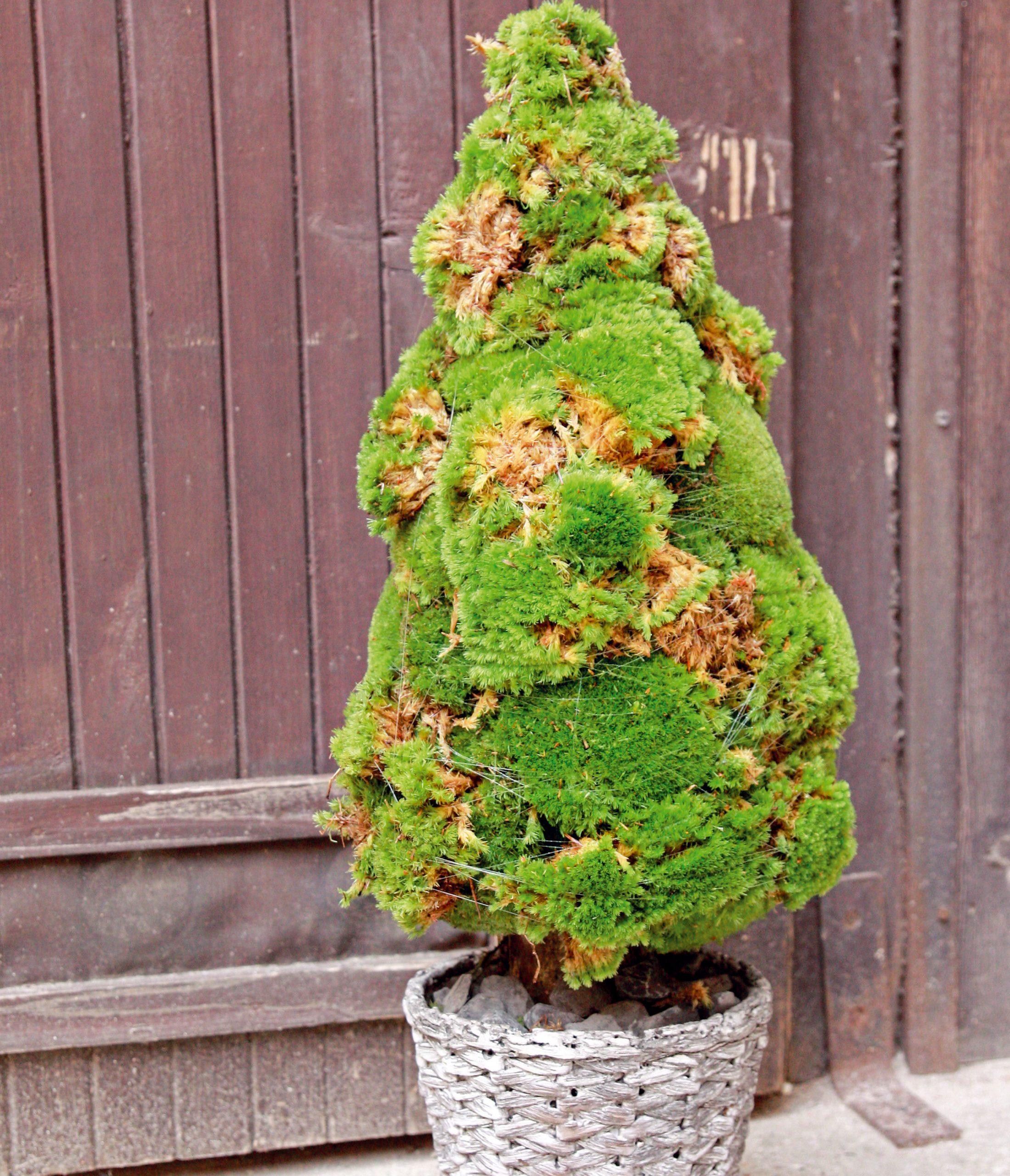 Zelený  Dekoratívne vianočné stromčeky môžete vytvoriť zčohokoľvek. Popustite uzdu fantázii apeniaze si radšej ušetrite na darčeky. Mach, šišky či jabĺčka, čokoľvek môže byť základom vášho vianočného stromčeka.