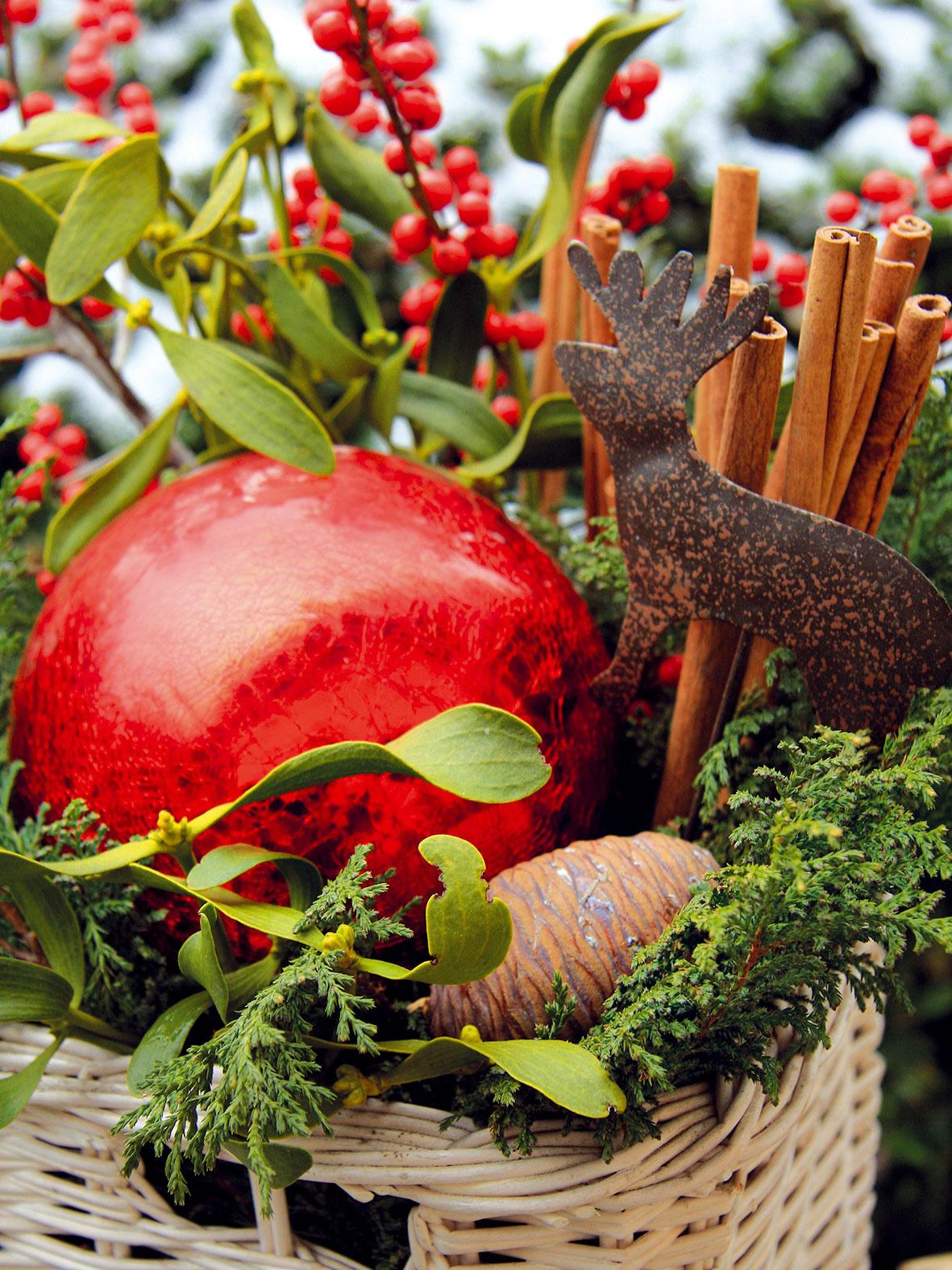 Zimné dekorácie   Vľúdnosť azaujímavosť môžu do záhrady priniesť aj drobné dekorácie, ktoré vnej môžete vprimeranom množstve rozmiestniť. Mali by harmonizovať so štýlom záhrady amať skôr prírodný charakter. Stačí, keď drôtený či prútený košík naplníte šiškami alebo kokosovými orechmi, prípadne machom či kôrou, apostavíte ho na viditeľné miesto – ideálne pred stenu zbrečtanu či iných vždyzelených rastlín. Farebnosť takejto kompozícii dodajú staré vianočné ozdoby či farebné sklené gule. Skladbu použitých prírodnín môžete počas zimy podľa nálady meniť.