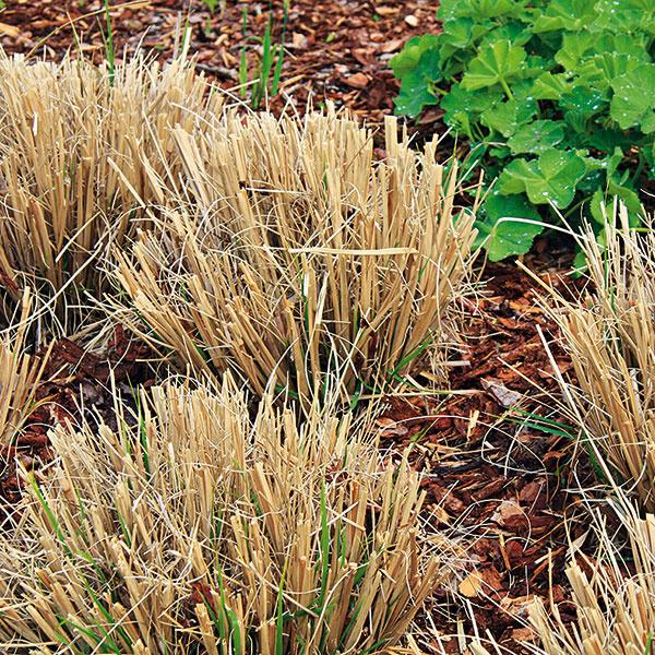 starostlivosť o okrasné trávy na jar