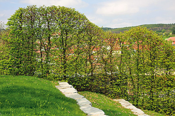 Tvarovanie listnatých živých plotov