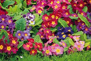 10 februárových úloh do záhrady