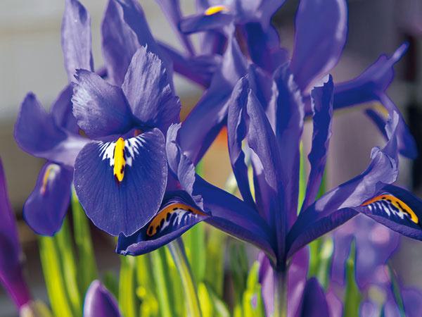 10 najkrajších kvetov skorej jari