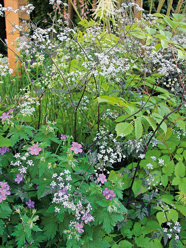 Počas vegetačného obdobia tu stále niečo kvitne. Mnohé vysadené rastliny akoby vnášali do záhrady tajomnú atmosféru lesa.