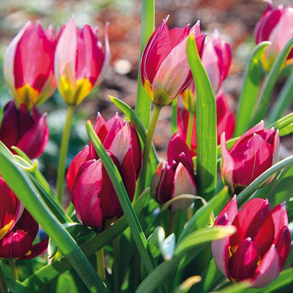 10 úloh do záhrady, na ktoré by ste v apríli nemali zabudnúť